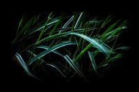 Chinese grass, Miscanthus, abstract, art, background, bewegend, beweging, black, blade, blades, blue, botanic, culm, cut, cutting, foliage, fresh, garden, grainy, gras, grass, green, groen, knife, knives, leafage, leaves, move, movement, moving, mysterious, mystery, mystical, nature, plant, planten, plants, purity, razor, razors, sharp, sharpness, stress, striped, structure, texture, threatening, tuin, undergrowth, vegetation, vibrant, vitality, waving, white, wild, wind, winderig, windy