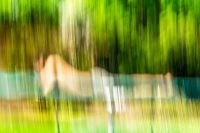Categorie, ElmerRalphDinkelaar, Mensen, Niels, Portret, art, backyard, boy, child, conceptual, enjoyment, fineartphotography, garden, geluk, grass, green, hammock, hammockhappiness, hangmat, happiness, happy, holiday, idyllic, impressionism, impressionistic, impressionistisch, languor, leisure, lezen, motion, ontspanning, outdoors, painting-like, peace, pictorialism, picturalisme, portrait, reading, recreation, relaxation, repose, reposing, streaked, sunny, tonalism, trampoline, tranquility, tuin, vague, yard, yellow, young, youth