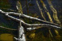 Aberfoyle, Schotland, Scotland, beenderen, botten, dood, gebeente, hout, meer, stammetjes, tak, takken, ven, water