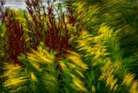 Delfzijl, berm, beroering, beweging, bloemen, chaos, geel, gras, groen, impressionistisch, natuur, rood, storm, stormachtig, streperig, vegen, wind, zuring