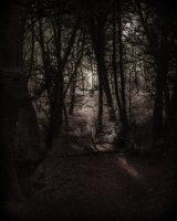 ElmerRalphDinkelaar, Oxfordshire, bos, evening, fairylike, forest, geheimzinnig, pad, path, secretive, spoor, sprookjesachtig, track, twilight, wood