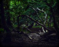ElmerRalphDinkelaar, Oxfordshire, afsterven, branches, dead wood, dode boom, dood hout, dying, forest, geheimzinnig, gewei, herfstbladeren, hout, secretive, stammen, takken, wood