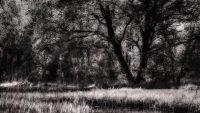 Elmer Ralph Dinkelaar, Landschap, Weerribben, Woldlakebos, bomen, bos, lichtspel, natuur, rietpluimen