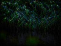 ElmerRalphDinkelaar, Scheerwolde, Weerribben, donker, druppels, kanaal, nat, ochtend, ochtendschemering, platgewaaid, regen, riet, steenwijkerdiep, vaart, vochtig, water, waterdruppels, wind