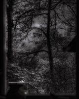 Elmer Ralph Dinkelaar, Steenwijkerdiep thuis, autumn, bomen, bos, cozy, doorzicht, frame, garden, herfst, huiskamer, raam, safe, silhouet, stormachtig, stormy, trees, tuin, uitzicht, venster, view, window, window pane